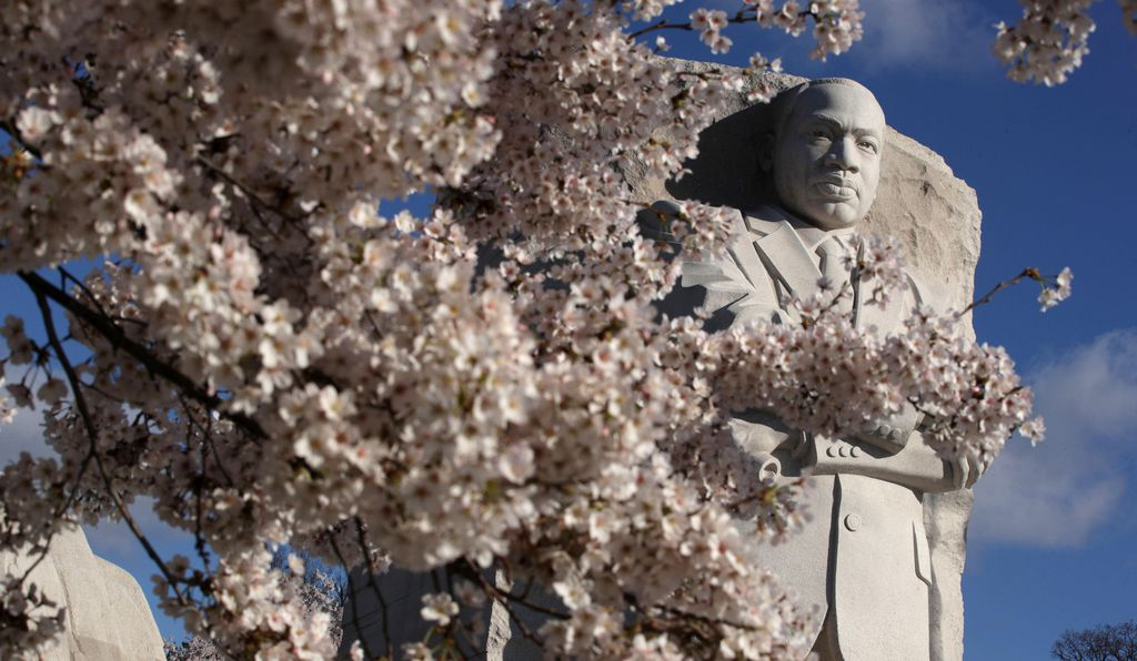 The Martin Luther King, Jr. Memorial overlooks cherry blossoms.