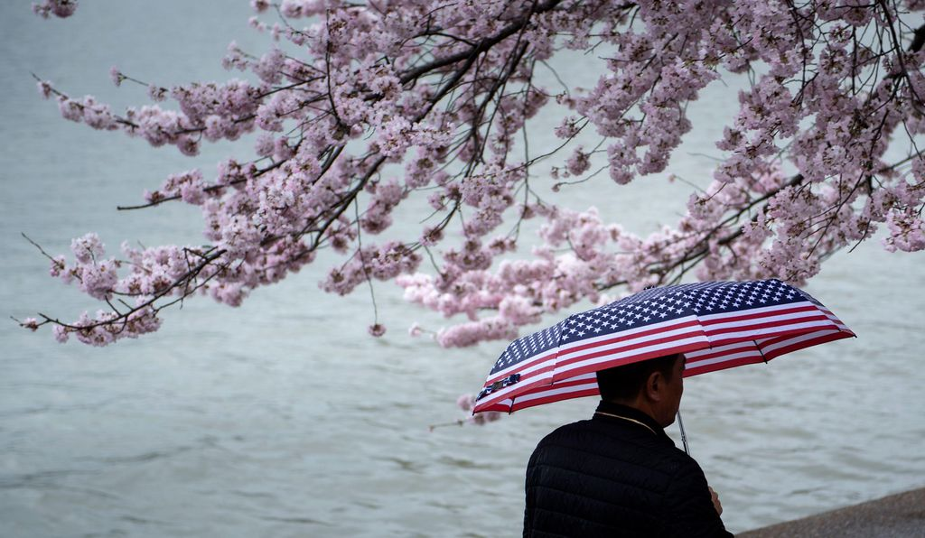 A man walks along the Tidal Basin path the day before this year