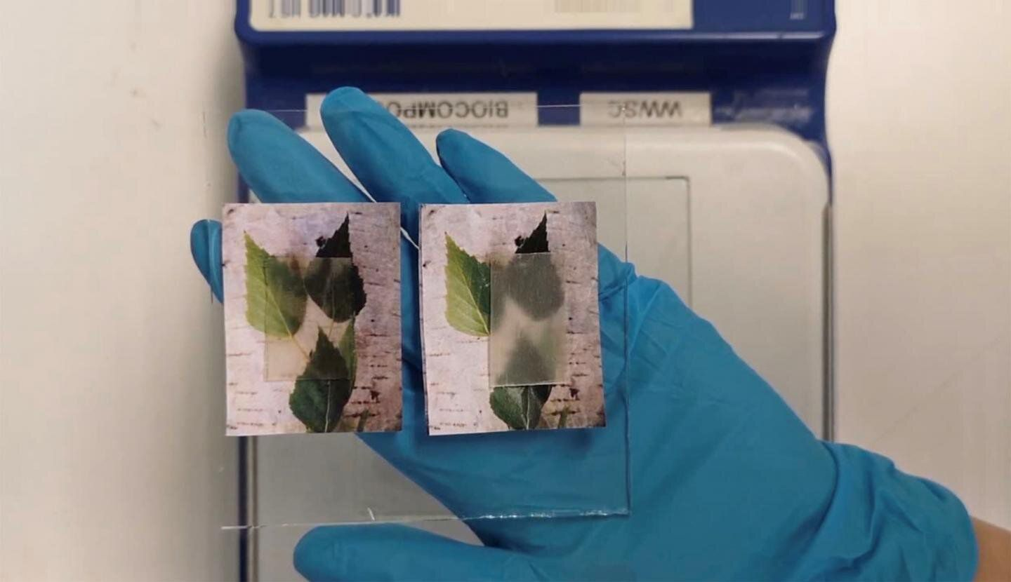 This Transparent Wood Could Be an Energy-Saver in Green Buildings | Innovation