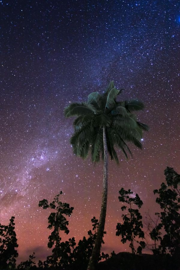 night sky and trees