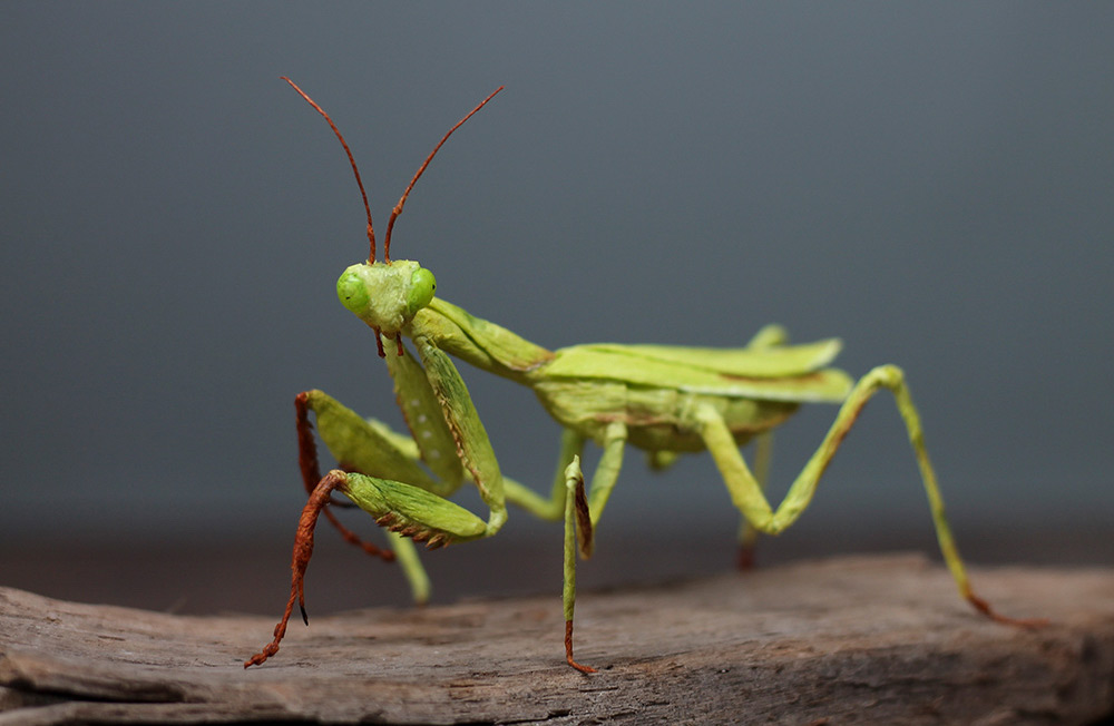 Praying Mantises, Venus Fly Traps, and Autumn Leaves Crafted From Finely Molded Crepe Paper