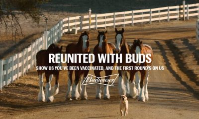 Budweiser giving away free beer for COVID vaccine with 'Reunited with Buds' giveaway. How to sign up.
